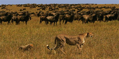 Safari Tours and Game Drives - Photo Series: See Impressum